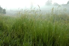 Long Grasses Stock Photos