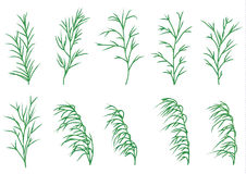 Long grasses set Stock Images
