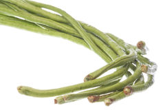 Long Green Beans Isolated Royalty Free Stock Images