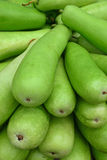 Long green bottle gourd shown from one end Stock Photos