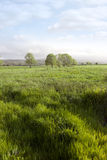 Long green grass for soilage Royalty Free Stock Photos
