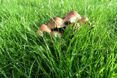 Mushroom closeup. Long green grass with some unknown sort of stock photos