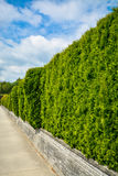 Long green hedge row on land terrace along concrete sidewalk on cloudy sky background. Long green hedge on land terrace along concrete sidewalk on cloudy sky Stock Images