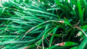 Long green leaves Stock Image