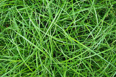 The long green matted grass, background Stock Photo