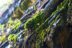 Long green moss covering cracked rocks and tree roots in the forest, selective focus. Close-up stock photos
