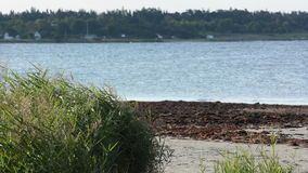Long green reed whit a sand beach in the background Royalty Free Stock Photos