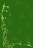 Long green tendril Royalty Free Stock Image