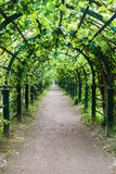 Green tunnel of trees and bushes in the Park. Long green tunnel of trees and bushes in the Park Stock Image