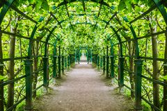 Green tunnel of trees and bushes in the Park. Long green tunnel of trees and bushes in the Park Royalty Free Stock Images