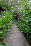 The long green way in the garden. Royalty Free Stock Photo