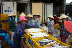 The man arrange fish plastic tray at fishing marke. Fish is placed in yellow plastic trays, transported to wholesale at fishing market, man arrange fish plastic Stock Photography