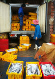 Two people take fishing tray out of the truck .LON. Fish is placed in yellow plastic trays, transported to wholesale at fishing market, men and women take these Stock Image