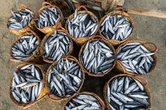 LONG HAI, VIETNAM - 03 JULY 2016: Fresh fishes on plasitc basket for sale in Long Hai fish market on the beach stock images