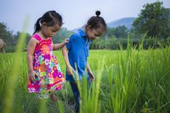 Long hair boy and little girl playing in rice field. and a girl she scared a muddy stock photo