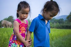 Long hair boy and little girl playing in rice field. and a girl she scared a muddy. High resolution image gallery stock photography