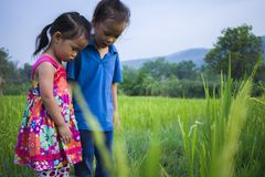 Long hair boy and little girl playing in rice field. and a girl she scared a muddy. High resolution image gallery stock images