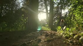 Long hair brunette girl walking in sunset coniferous forest. Static slow motion wide shot stock video footage