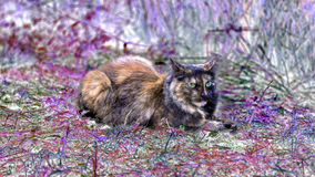 Long hair cat with one blue and one green eye. Is have a rest on a meadow with pink colored plants stock photography