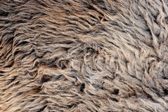 Long hair woollen fur background Royalty Free Stock Photography