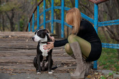 Long-haired blonde woman in high boots stroking dog. Stylish blonde in short dress holding the collar purebred dog on bridge stock photo