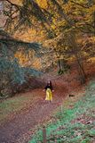 Lady in bright yellow trousers dancing in an autumnal autumn / fall forest; yellow, orange, red, green trees. A long haired brunette, caucasian lady wearing royalty free stock photo