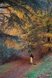 Lady in bright yellow trousers dancing in an autumnal autumn / fall forest; yellow, orange, red, green trees royalty free stock photos