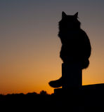 Long haired cat silhouette. Silhouette of a long haired cat on fence post against setting sun Stock Photography