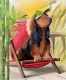 Long Haired Dachshund Watercolor Painting Stock Image