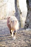 Long-haired domestic pone with beautiful mane in sunny day royalty free stock images