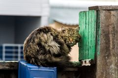 Long-haired mongrel cat sitting on a fence royalty free stock photos