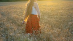 Long-haired young woman touches the ears of wheat. The setting sun. Inspiration.  stock video footage