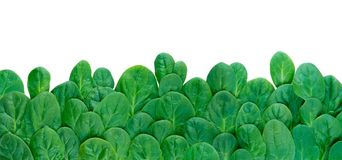 Long horizontal border of spinach leaves. Long horizontal border of green spinach leaves isolated on white stock photo