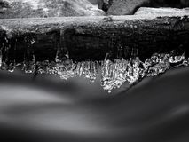 Long icicles hang above dark freeze  water of mountain stream. Winter season at river, thin icicles are hanging on fallen trunk above milky water level Royalty Free Stock Images