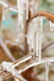 Long icicles hanging from frozen branch in winter Stock Photos