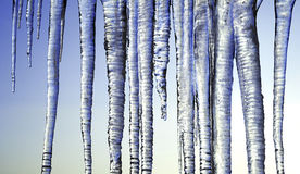 Long Icicles Isolated on Blue Sky Royalty Free Stock Image