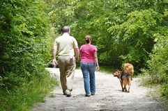 Long island new york walking with dogs Royalty Free Stock Photo