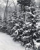 Long Island snöfall royaltyfria bilder