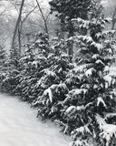 Long Island Snowfall Royalty Free Stock Images