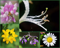 Long Island-Wildflower-Collage Stockbild