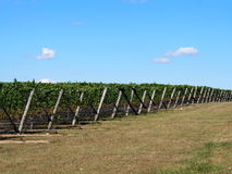 Long Island Wineries and Vineyards. Long Island has over a dozen wineries and vineyards and produces some of the worlds finest wines Stock Photo