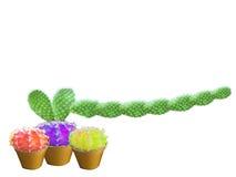 Long isolat de main de castus vert et d'ami de boule de couleur du castus trois Image stock