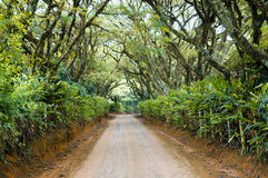 A long journey  in a  Brasil Farm road. Country road in Brasil  full of trees . An beatifull place for resting Stock Image