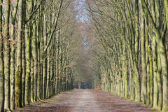 Long lane in forest Royalty Free Stock Images