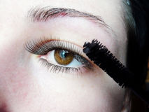 Long lashes close up Royalty Free Stock Photo