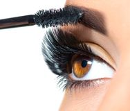 Long lashes closeup. Beautiful woman applying mascara on her eyes. Makeup Royalty Free Stock Photography