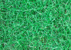 Long leaf of green grass texture background Royalty Free Stock Photos
