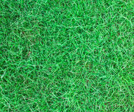 Long leaf of green grass texture background Royalty Free Stock Photo