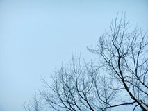 Leafless branches. Long, leafless branches silhouetted against the blue sky stock photo