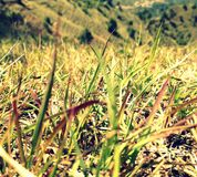 Long leafs of grass Stock Photo